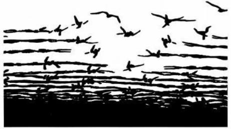 barbed wire graphic doves